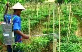 Aplikasi pestisida di tanaman