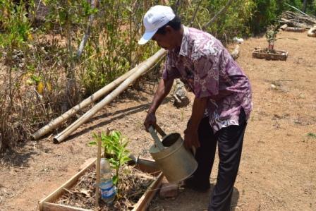 Penggunaan Tricoderma sp untuk mengatasi busuk akar