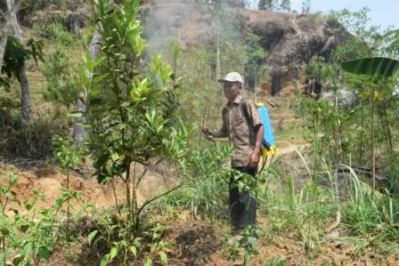 Pengendalian tanaman jeruk dengan memakai agens hayati