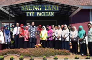 KWT (Kelompok Wanita Tani) Pacitan Implementasikan Gerakan Tanam Cabai di Pekarangan